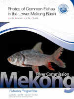 Photos of Common Fishes in the Lower Mekong River Basin